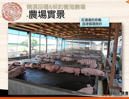 掛川酵素豚&酵素雞.4.JPG
