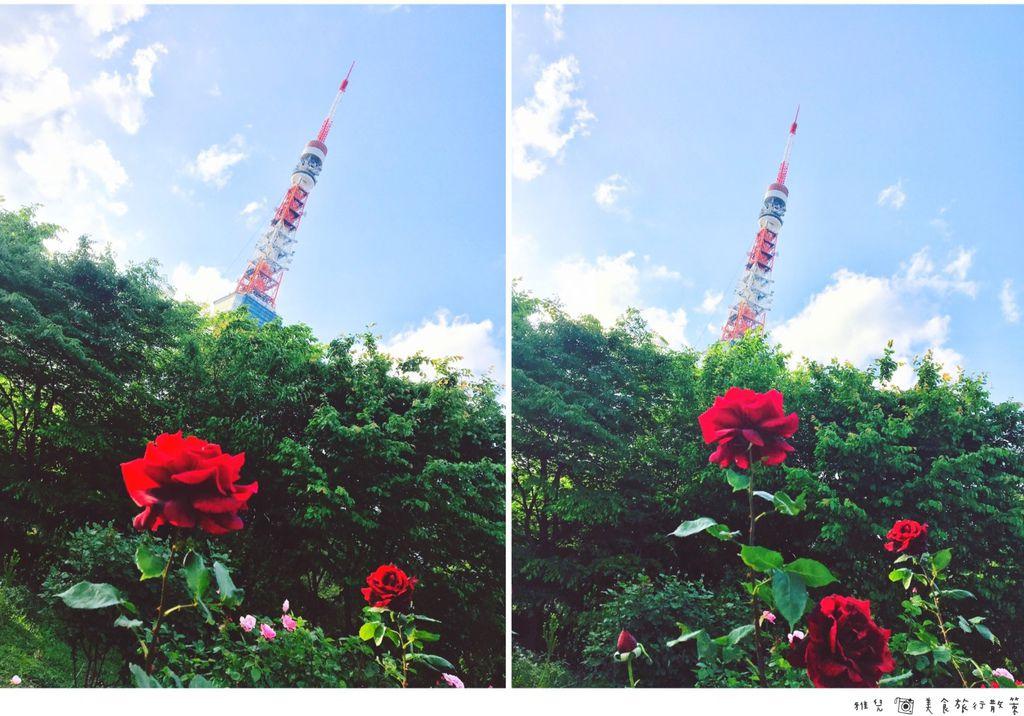 ButterCam-鐵塔與玫瑰