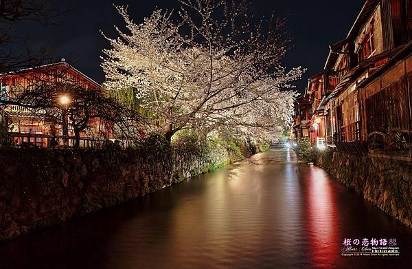 P1000724-祉園白川夜櫻.jpg