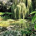 19. 莫內的花園.jpg