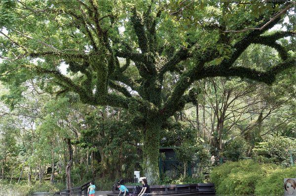士林官邸:[閃點]台北 士林官邸~好花好樹好放閃