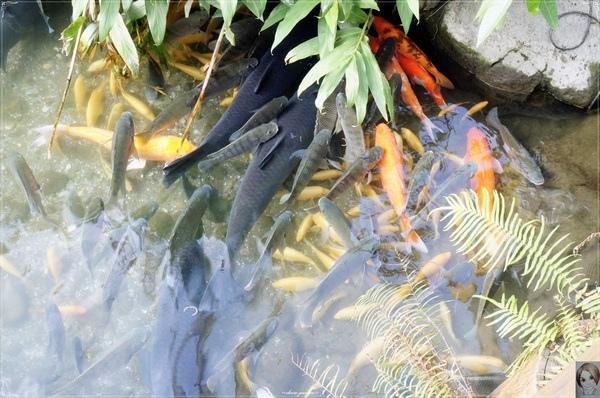 立川漁場:[花蓮爆點一日遊]花蓮 立川漁場~摸蜆兼洗褲之黃金蜆的故鄉