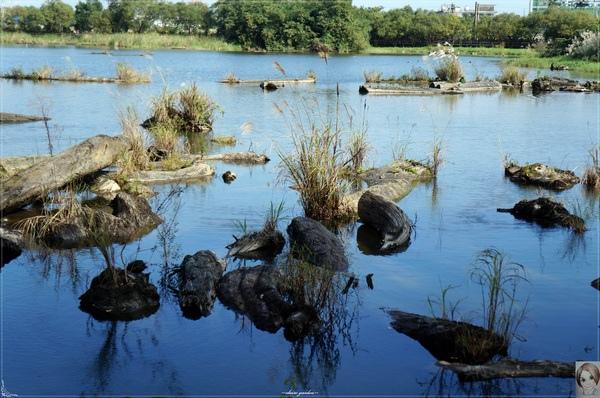 羅東林業文化園區:宜蘭 羅東林場~婀娜多姿的漂流木造型
