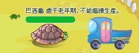 可憐巴西龜.JPG