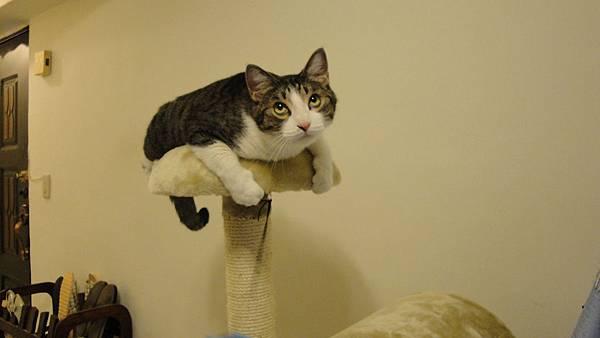 為什麼要把我掛在屋頂啦~