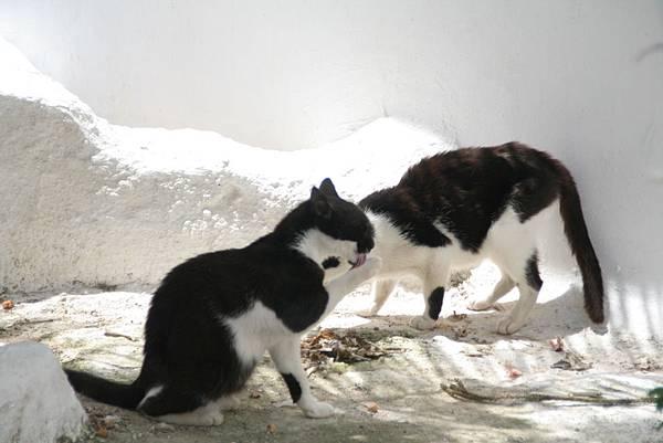 1833.Hora~正在享受鮮魚大餐的小貓.JPG