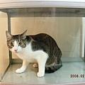魚缸裡的貓