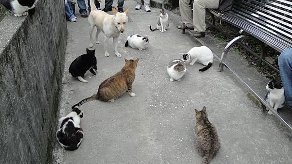 31.貓無所不在