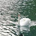 087.布雷德湖(Bled Lake)