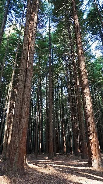 DSC07033.紅木森林公園