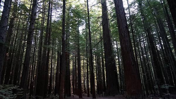 DSC07045.紅木森林公園