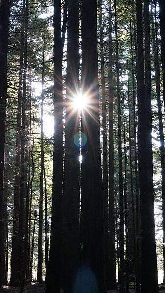 DSC07042.紅木森林公園