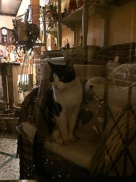 2015-06-11 22.02.13_Cortona 櫥窗之那是真貓