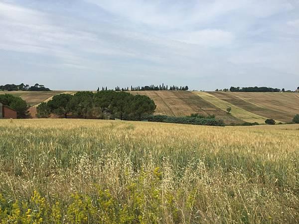 2015-06-12 10.31.58_Cortona to Montepulciano 沿途風光