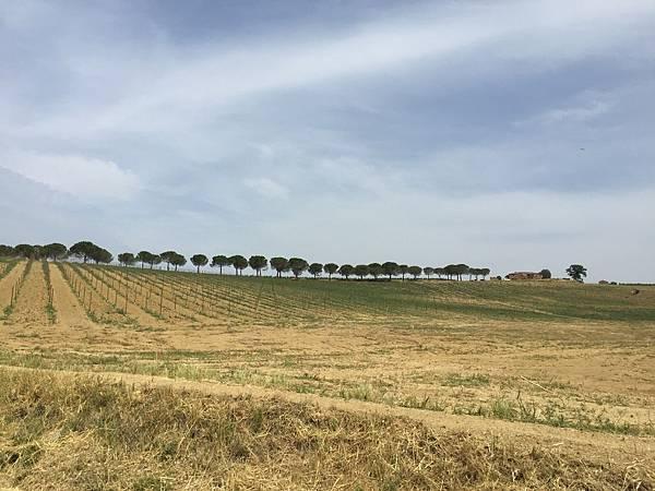 2015-06-12 10.34.18_Cortona to Montepulciano 沿途風光