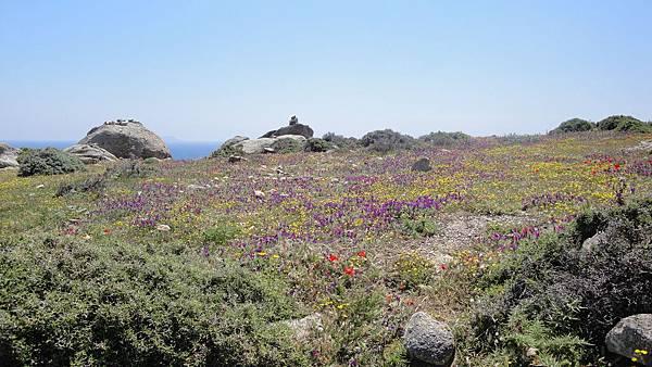 1708.我們爬到一座小山丘上  到了頂端發現的竟是五彩繽紛  滿地的野花