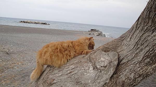 2222.Kamari Beach (黑海灘)~雖然圓滾滾可是爬樹還是難不倒我的