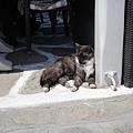 DSC01457.在希臘遇見的第一隻貓.JPG