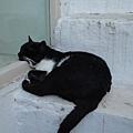1570.看起來像宿醉還沒醒的貓