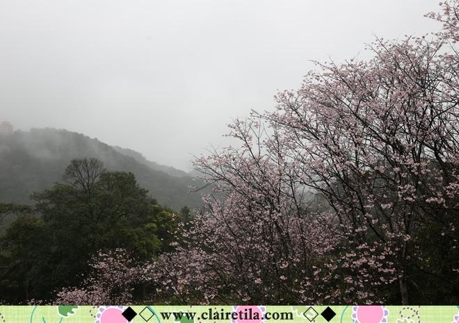 天明宮賞櫻 (33).JPG