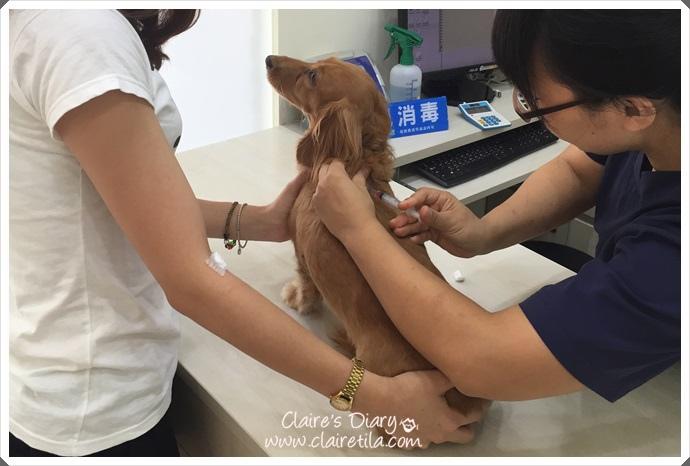 2015年度預防針‧景美大群動物醫院 (15).JPG