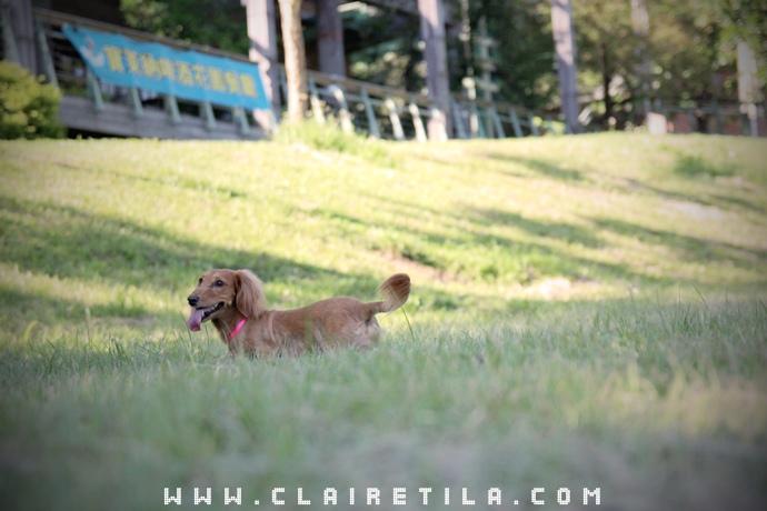 寵物攝影瑞比特設計工作室-TILA (5).JPG