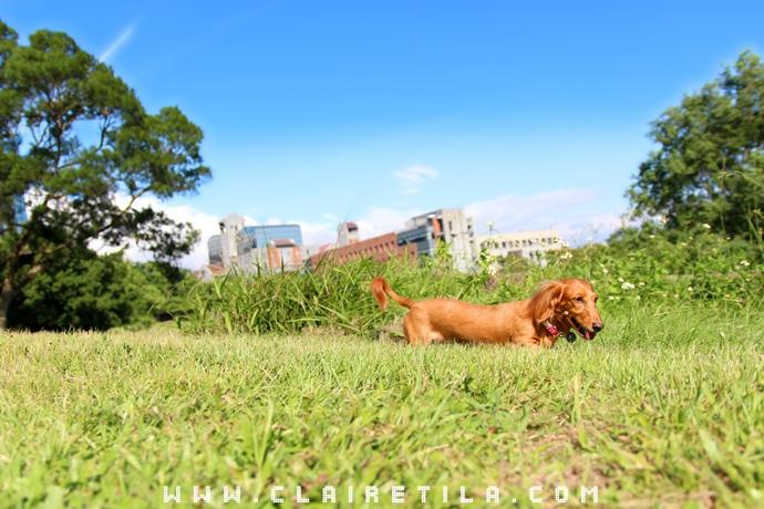 寵物攝影瑞比特設計工作室-TILA (13).JPG