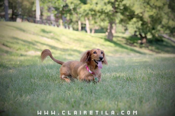 寵物攝影瑞比特設計工作室-TILA (16).JPG