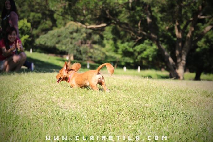 寵物攝影瑞比特設計工作室-TILA (15).JPG