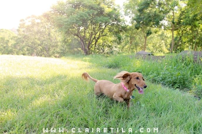寵物攝影瑞比特設計工作室-TILA (42).JPG