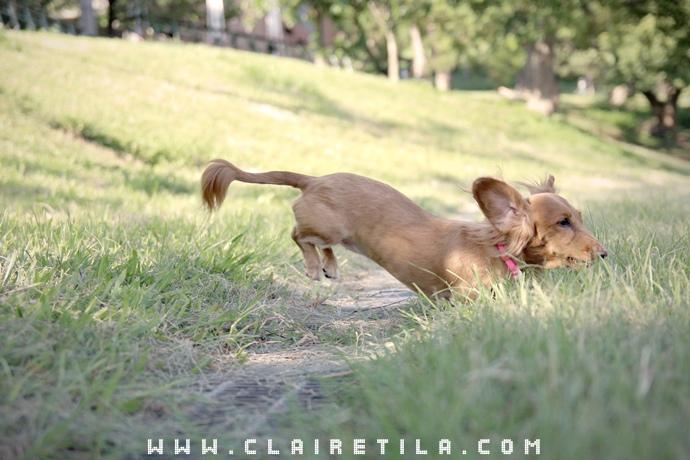 寵物攝影瑞比特設計工作室-TILA (48).JPG