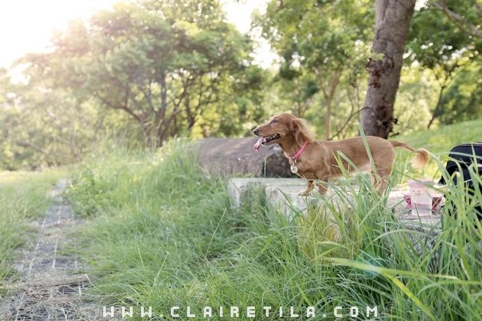 寵物攝影瑞比特設計工作室-TILA (47).JPG