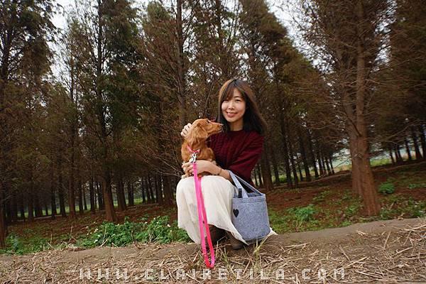 落羽松 紅藜 (14).JPG