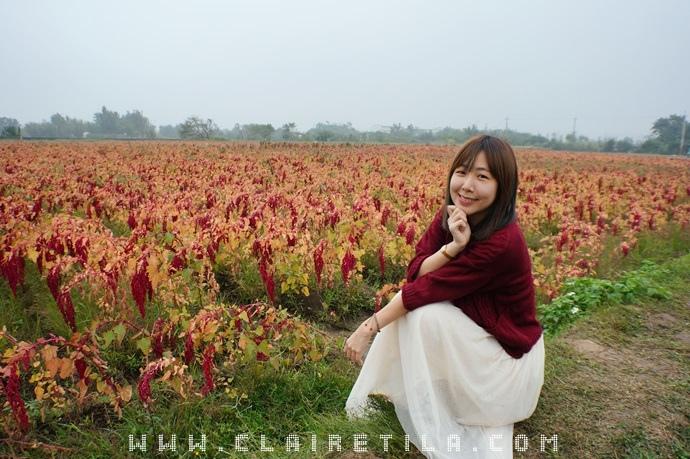 落羽松 紅藜 (25).JPG
