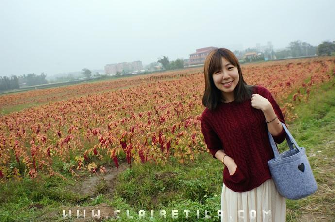 落羽松 紅藜 (27).JPG