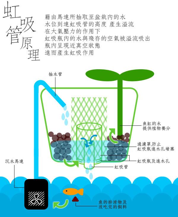 香草與魚 (3).jpg