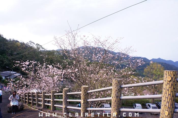 201603 天明宮賞櫻花 (18).JPG