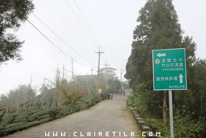大崙山銀杏林步道 (3).JPG