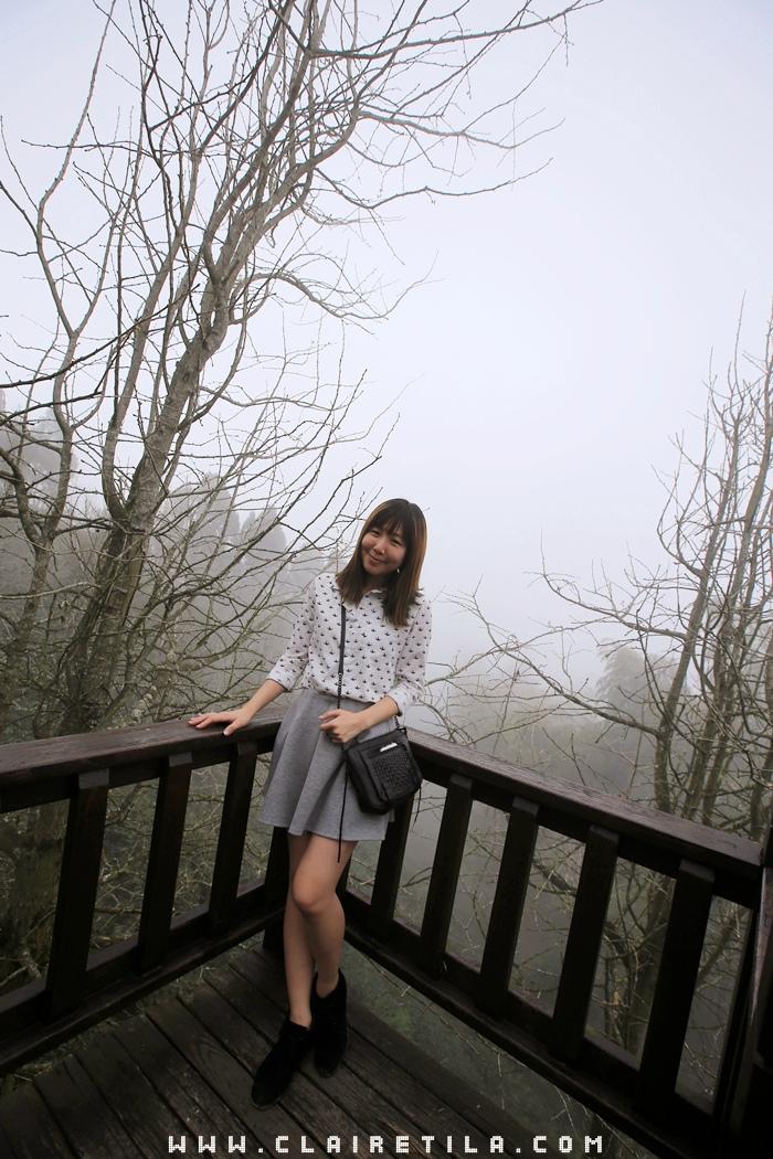 大崙山銀杏林步道 (14).JPG