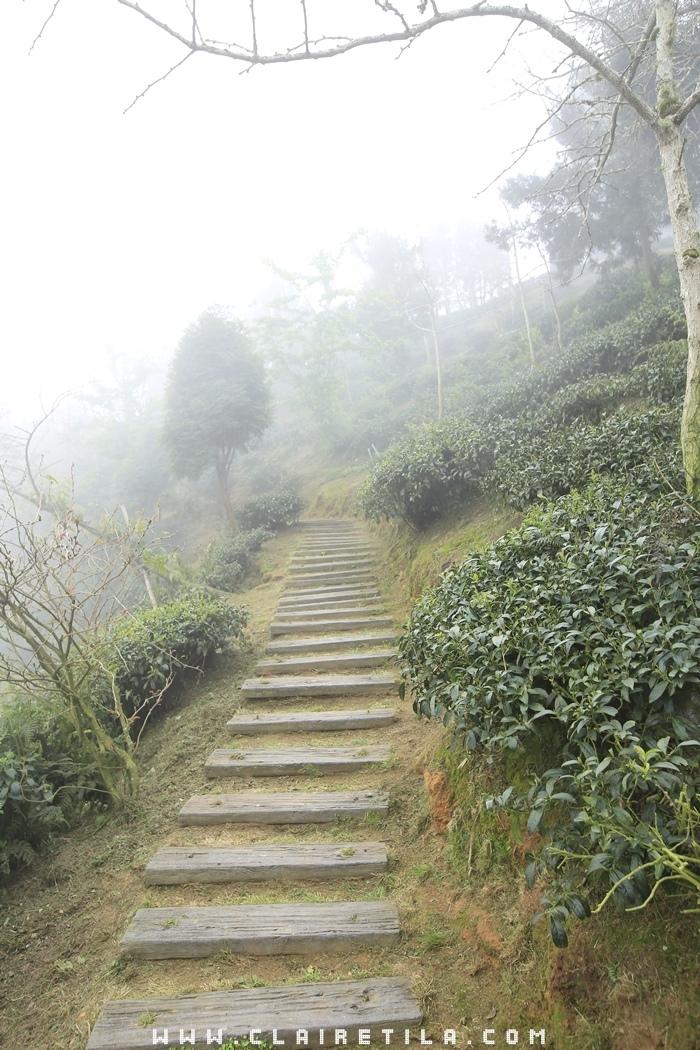 大崙山銀杏林步道 (15).JPG