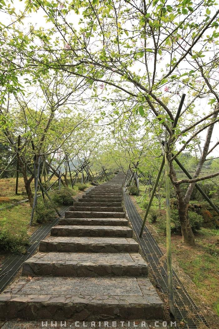 7「蟬說:鳳凰亭序」觀景迴廊、櫻花步道 (43).JPG