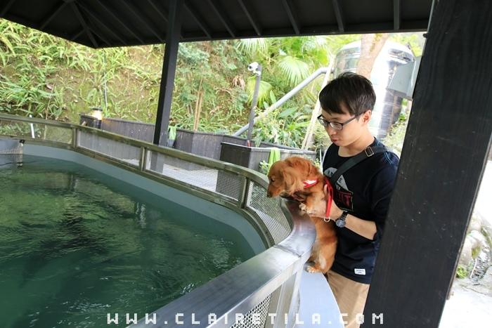 花岩山林-寵物友善花園景觀餐廳 (4).JPG
