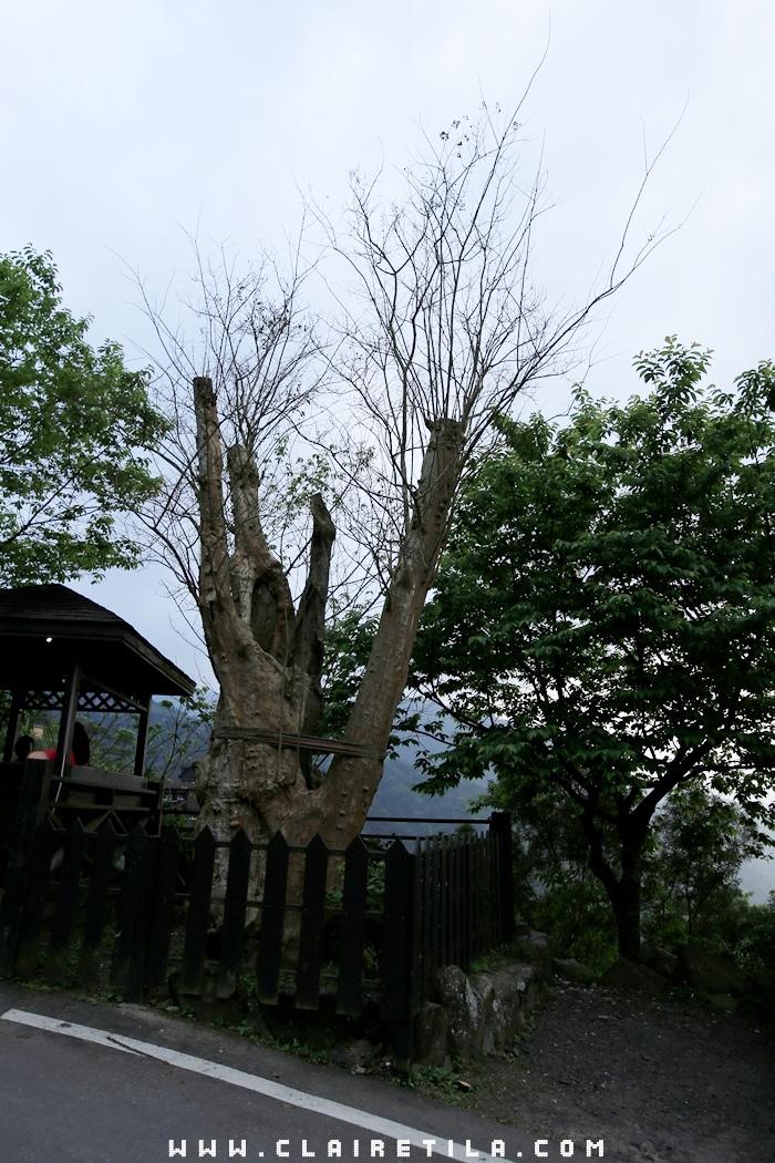花岩山林-寵物友善花園景觀餐廳 (6).JPG