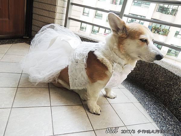 10603-婚紗08.jpg