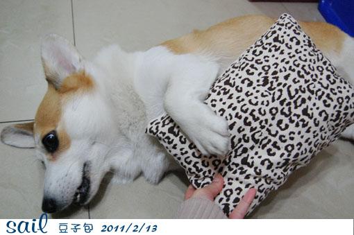20110213-豆子包4.jpg