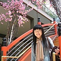 硬是要跟假櫻花照相
