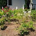 墓園裡的花就那麼一些...