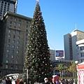 Seattle西湖中心的聖誕樹簡直沒得比啊~