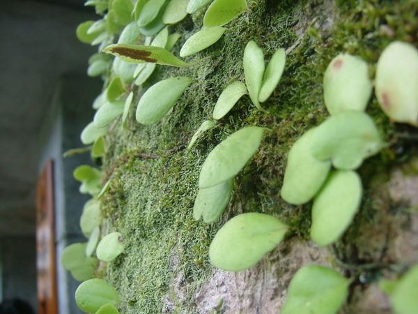 北海道民宿外的蕨類.JPG