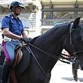 佛羅倫斯-騎兵.JPG